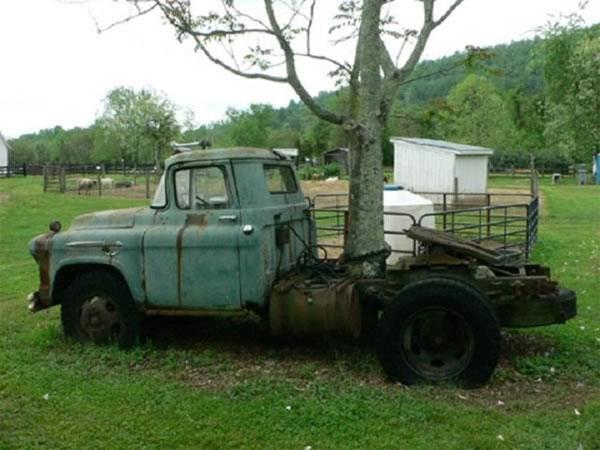 Một cái cây ở bang Virginia mộc xuyên qua xe tải và phát triển bình thường. (Ảnh: Jkmscott)