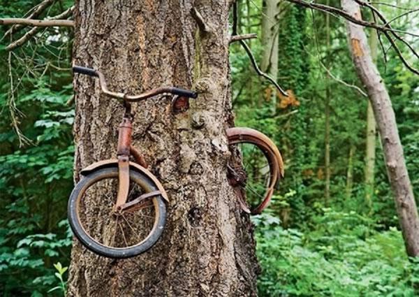 Cây ăn xe đạp quái dị khiến đảo Vashon trở thành một địa điểm tham quan nổi tiếng. (Ảnh: ExclusivePix)