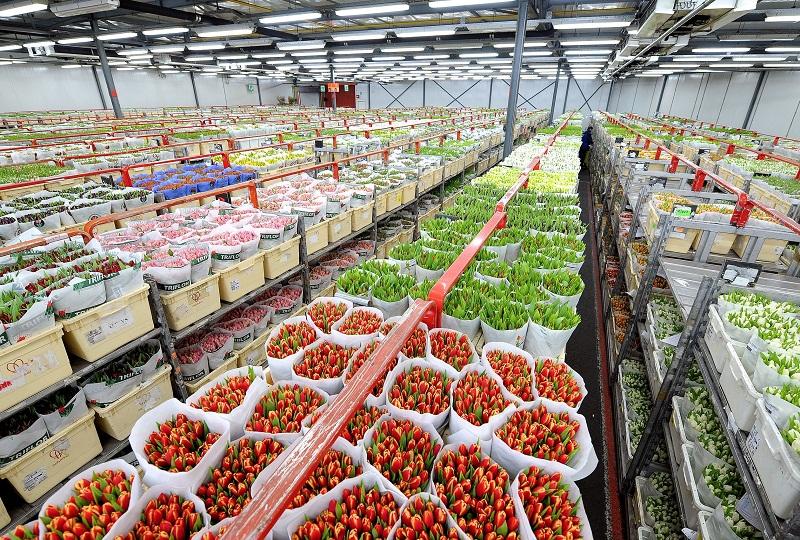 Một chợ bán buôn hoa tại Đức.