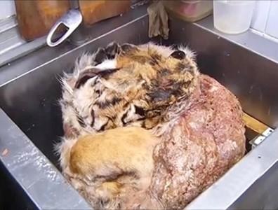 phát hiện ra 50kg thịt hổ