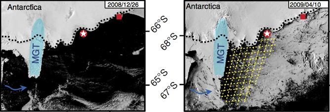 Lưỡi sông băng (màu xanh) vào mùa hè và mùa đông. Hố băng (polynya) được tô màu vàng.
