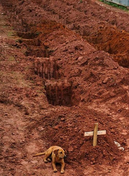 Chú chó ngồi bên mộ của chủ, nạn nhân của trận lở đất ở Rio de Janiero ngày 15/1/2011