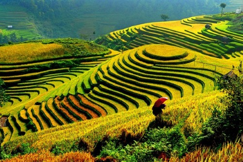 Ruộng bậc thang của Việt Nam xếp vị trí thứ 6 trong danh sách 10 cảnh  quan đầy sắc màu nhất thế giới