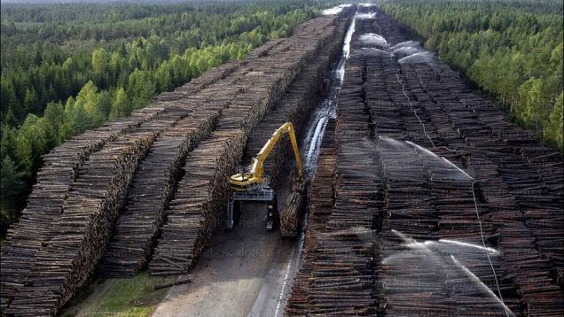 Nghĩa địa gỗ tại Byholma, Thụy Điển. Cơn bão Gudrun đổ bộ năm 2005, quật ngã rất nhiều cây cối. Người ta gom chúng lại và tạo ra khu bãi chứa khoảng một triệu m3.
