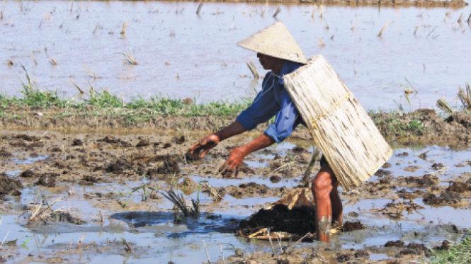 Ông Trần Văn Chuyễn ở xã Thạch Đông, TP Hà Tĩnh mặc áo tơi chống nắng ra đồng - Ảnh: Văn Định