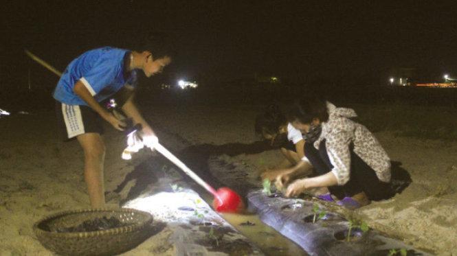 21g ngày 29-5, gia đình chị Đặng Thị Thảo (xã Nghi Long, huyện Nghi Lộc, Nghệ An) dùng đèn pin để trồng dưa hấu vào ban đêm nhằm tránh nắng - Ảnh: Doãn Hòa