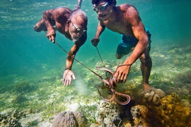 Hai cha con phối hợp săn bạch tuộc dưới vùng biển san hô ngoài khơi đảo Sulawesi, Indonesia - Ảnh: NG