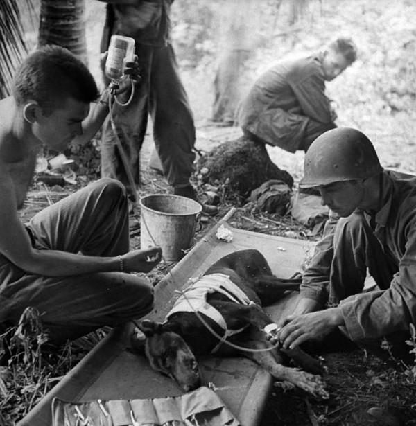 Các binh lính chăm sóc một chú chó bị thương trong Chiến Tranh Thế Giới thứ 2 vào năm 1944.
