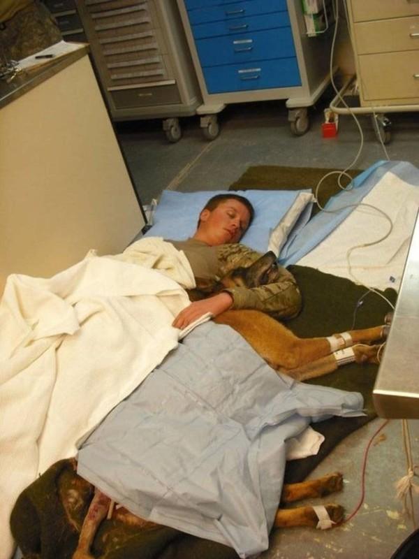 Anh lính Ryan Lee và chú chó Valdo ôm nhau ngủ trên sàn bệnh viện sau khi may mắn thoát chết trong cuộc chiến ở Afghanistan vào năm 2011.