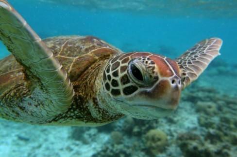 500 xác rùa biển Hawksbill được tìm thấy trên tàu của dân săn trộm Trung Quốc